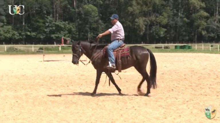 Rédea de pescoço para seu cavalo de cavalgada