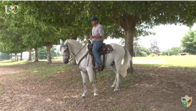 TV UC - Use o recuo para fortalecer a garupa do cavalo