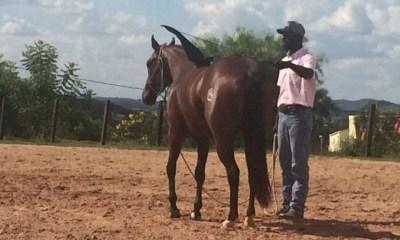 Dessensibilizar o cavalo