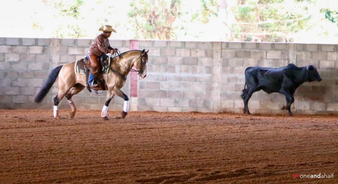 5 dicas para iniciar seu cavalo no Working Cow Horse