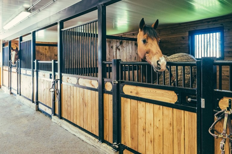 A baia é o melhor local para deixar o seu cavalo?