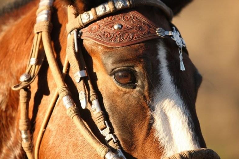 Cavalgada no Vale Sagrado em cavalos Paso Peruano - Machu Picchu