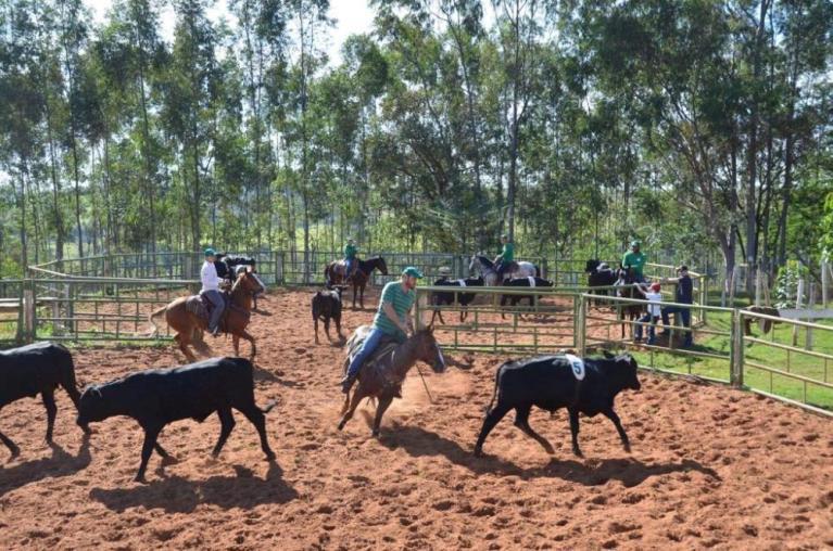 Os 'doutores' do Ranch Sorting praticam na Estância da Mata