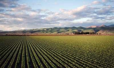 Sistema CNA/Senar lança plataforma A ideia é estimular venda de produtos do agro