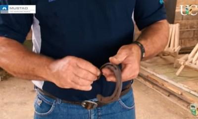 O que você precisa saber sobre ferraduras