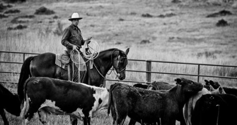 Buck: o vaqueiro californiano O documentário Buck apresenta a história do vaqueiro Buck Brannaman, inspiração para o filme O encantador de cavalos, dirigido por Robert Redford