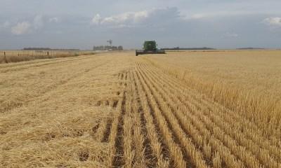 Exportações do setor agropecuário registram aumento de 17,5%