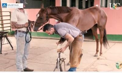 TV UC - Casquear cavalo que não conheço