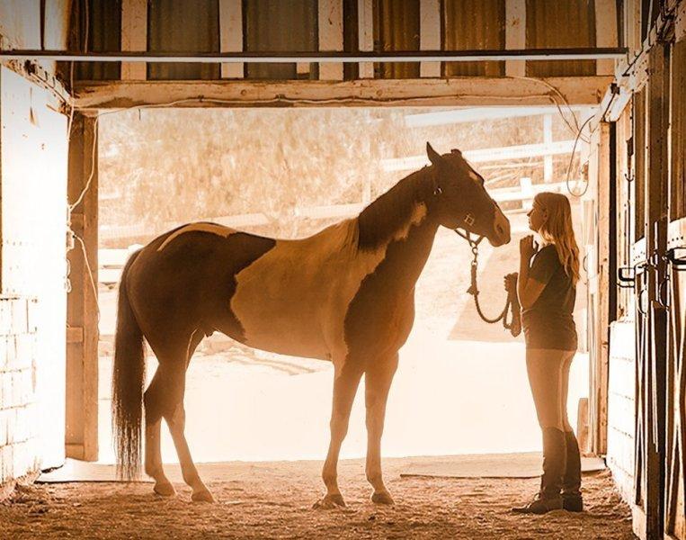 A Champion Heart - Um Coração Campeão Um filme de 2018 inspirador que conta a história de uma menina e seu cavalo