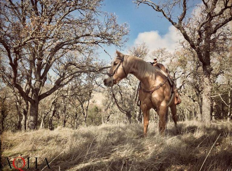 Até quando meu cavalo pode crescer? Inúmeros fatores podem interferir no desenvolvimento ou no crescimento do animal