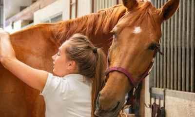 10 habilidades de equitação que todo cavaleiro deve conhecer Seja você iniciante ou experiente, essas habilidades são muito importantes