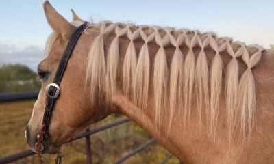 Arrisque-se nesse passo a passo de penteado para cavalo e faça do seu amigo de quatro patas o mais cobiçado do rodeio com este estilo simples, mas lindo