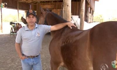 O Mensagem a Cavalo da TV UC de hoje conversa com você sobre algo que pode ser básico, como a diferença entre banho ou ducha no seu cavalo