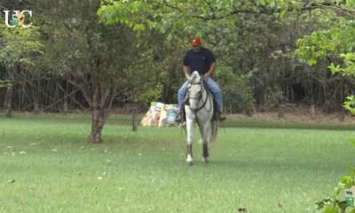O Mensagem a Cavalo da TV UC aqui no portal Cavalus te conta sobre a importância de trabalhar o seu cavalo em diferentes lugares