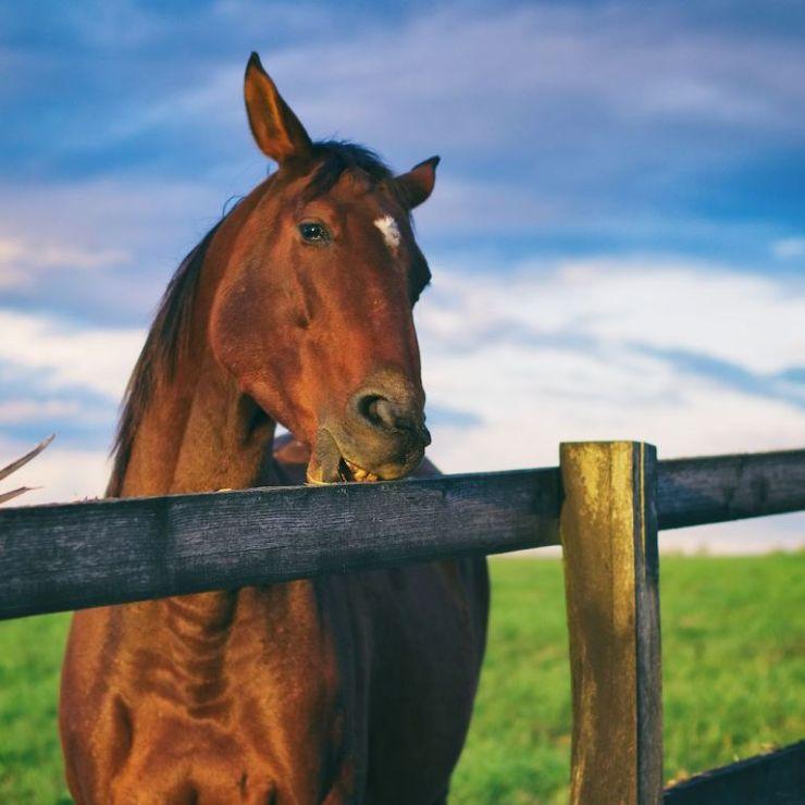 As estereotipias dos cavalos podem ser engolir ar, bater os cascos, andar em círculos. Seu cavalo faz isso? Preste atenção nesse artigo