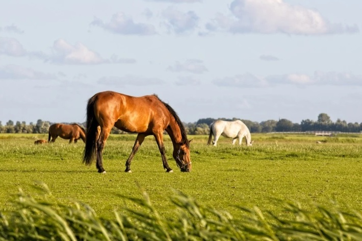Nutrição equina está diretamente ligada ao bem-estar animal