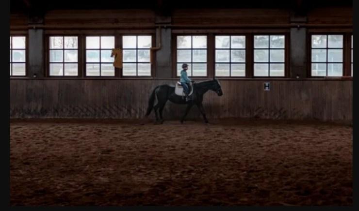 Aluisio Marins conta nesse artigo sobre como devemos perceber o que pedir ao nosso cavalo em dias de treino e em dias de prova