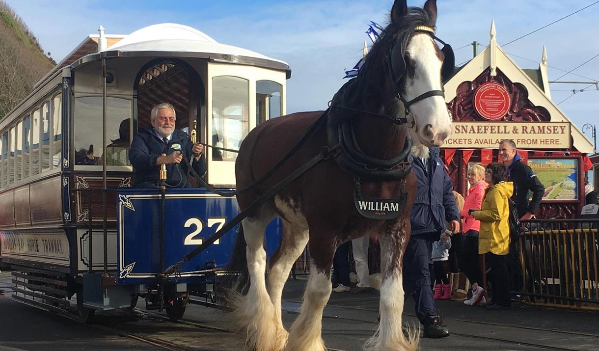 Atrelagem – passeios a cavalo em carruagens