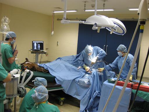 Cavalos que tomam anestesia geral morrem mais que humanos