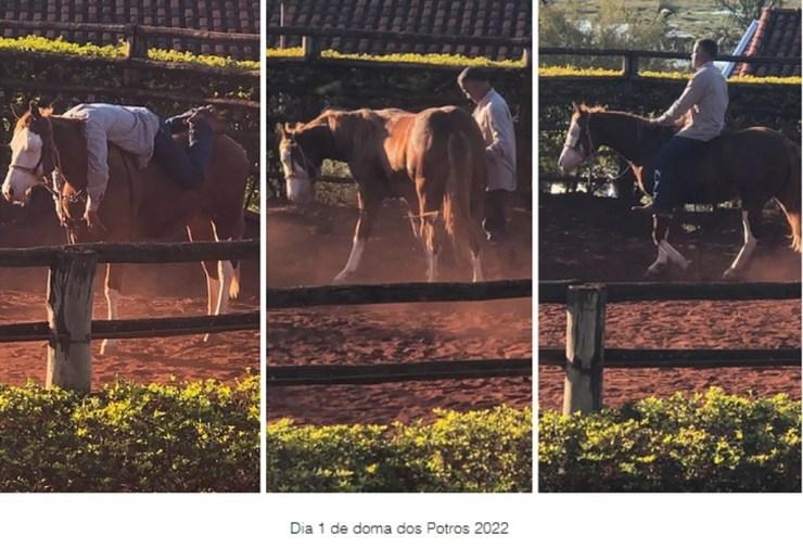 Karoline Rodrigues, em sua primeira coluna de 2021, aborda sobre esse tema tão peculiar. doma de cavalos é um trabalho nobre, quase uma arte