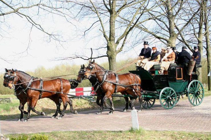 Cleveland Bay é uma das raças inglesas mais antigas do mundo. Uma raça de cavalos que se originou na Inglaterra durante o século 17