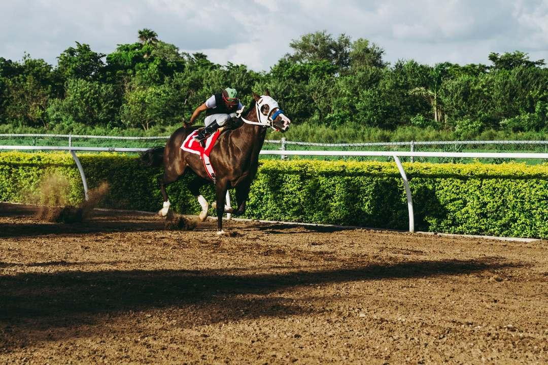 Fraturas de pelve nos cavalos atletas
