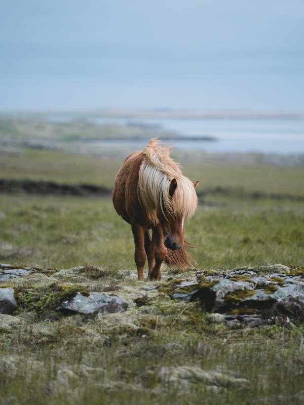 Ao realizar o manejo da tropa de equinos devemos ter muita atenção e cuidados especiais ao lidar com esses animais que tanto amamos