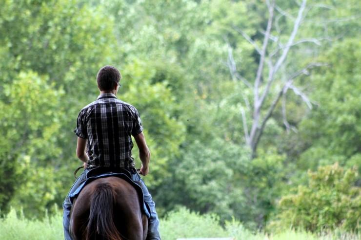 Confira esses conselhos se você está em busca de um novo cavalo para montar: dicas para sua primeira visita ao comprar um cavalo. Confira!