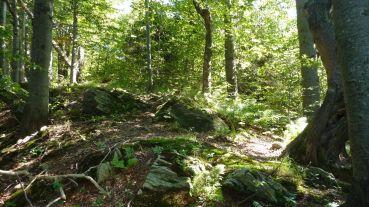 Prírodný enduro trail na Busove