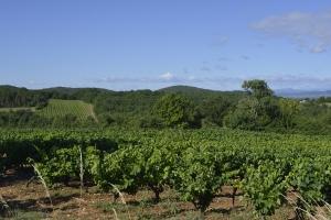 Vignobles à Barjac