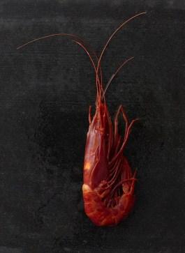 CarabinerosJump Shrimp