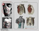musculo tronco
