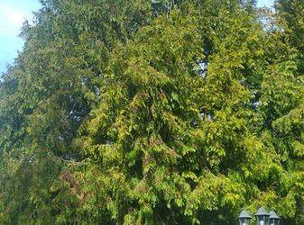 Abattage d'arbre et dessouchage   Couilly-Pont-aux-Dames