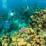 Scientists warn of global reef crisis