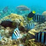 World's divers urge CIG to stop port