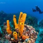 Coral move in excess of $40m