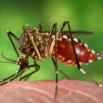 Local dengue fever cases climbing