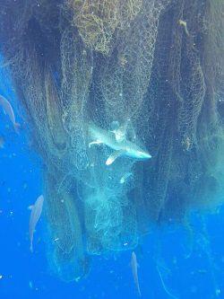 ghost net