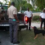 Police and DoA round up stray dogs