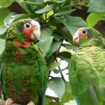Over 180 parrots registered in DoE amnesty
