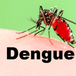 Local cases of dengue mount