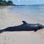 DoE recover dead porpoise from BT beach