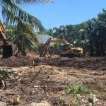 Landowner ignores warnings to stop ripping out mangroves