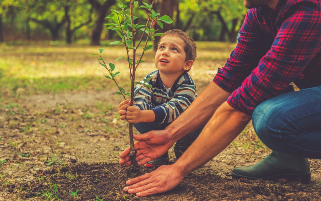 6 Tips for Planting Healthier Trees