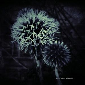 Moonstruck by Cazartco