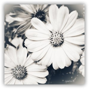 Those Daisy Days by cazartco
