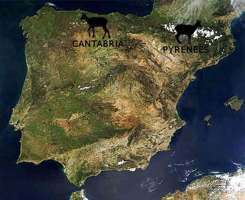 chamois map spain