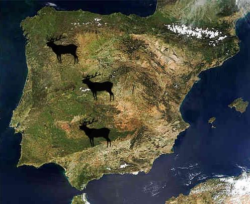 red deer map