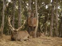Gestión del ciervo, hacia una estrategia conjunta