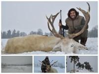 Record del mundo SCI de European White Red Deer (Ciervo blanco)